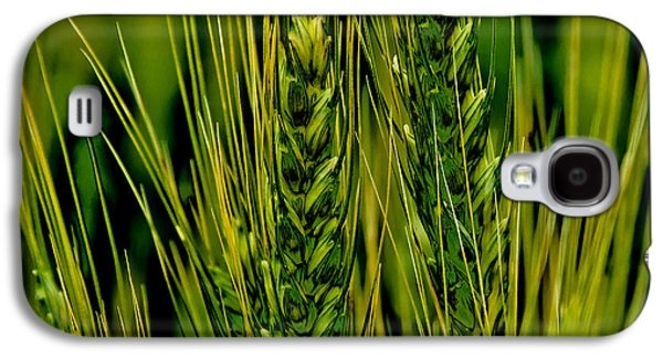 Unripened Wheat In The Palouse Galaxy S4 Case by David Patterson