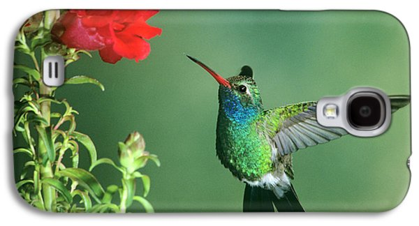Usa, Arizona Broad-billed Hummingbird Galaxy S4 Case by Jaynes Gallery