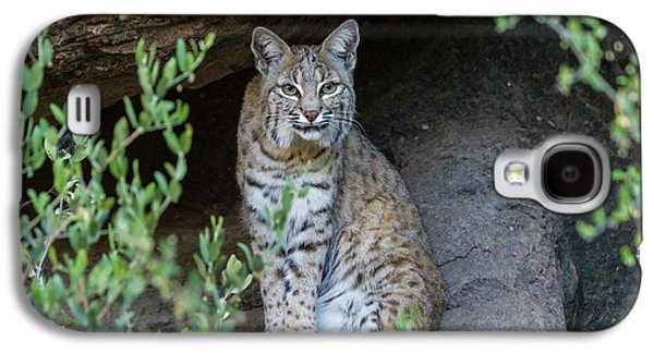 Usa, Arizona-sonora Desert Museum Galaxy S4 Case