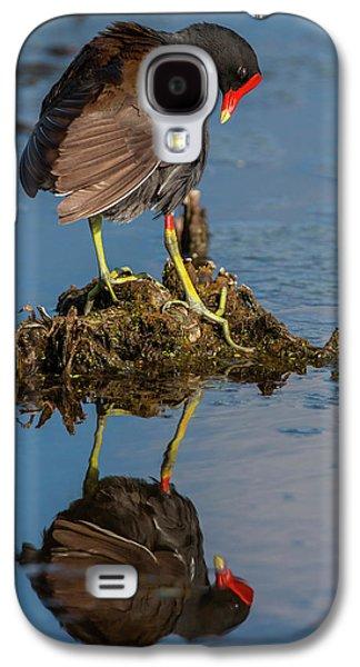 Usa, Florida, Green Cay, Wakodahatchee Galaxy S4 Case by Jaynes Gallery