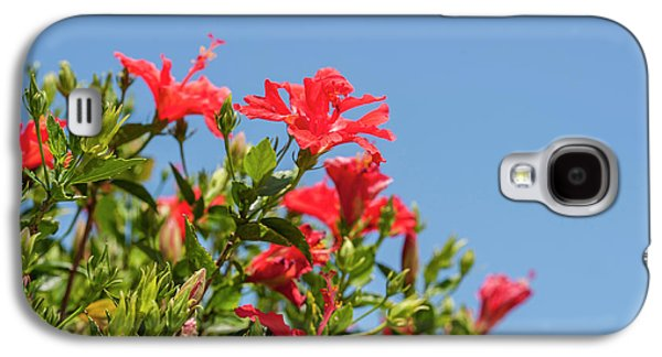 Usa, Florida, New Smyrna Beach, Hibiscus Galaxy S4 Case by Lisa S. Engelbrecht