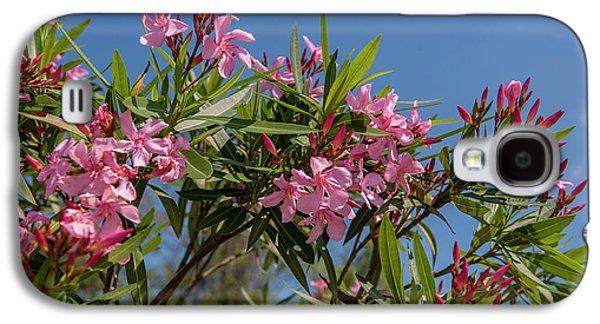 Usa, Florida, New Smyrna Beach, Oleander Galaxy S4 Case by Lisa S. Engelbrecht