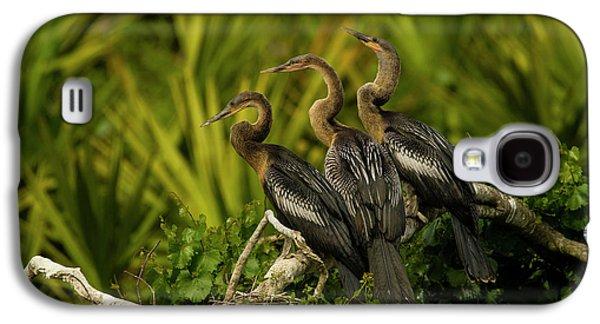 Usa, Florida, Orange County, Gatorland Galaxy S4 Case by Jaynes Gallery