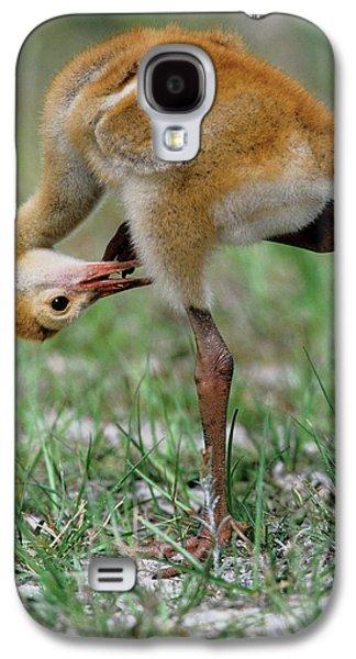 Usa, Florida Sandhill Crane Chick Galaxy S4 Case