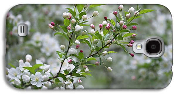 Usa, Ohio Cherry Blossom Branch Galaxy S4 Case by Jaynes Gallery