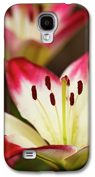 Usa, Oregon, Keizer, Cultivated Day Lily Galaxy S4 Case by Rick A Brown