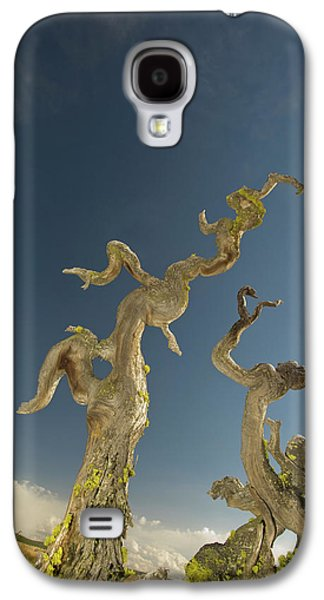 Vertical Tree Roots In Upper Geyser Galaxy S4 Case by Howie Garber