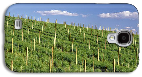 Vineyard, Napa County, California, Usa Galaxy S4 Case by Panoramic Images