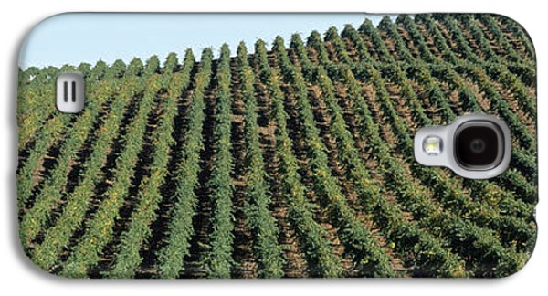 Vineyard, Napa Valley, Napa County Galaxy S4 Case by Panoramic Images
