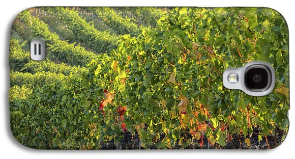 Vineyards In The Rolling Hills Galaxy S4 Case by Terry Eggers