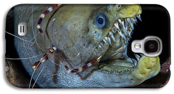 Viper Galaxy S4 Case - Viper Moray And Boxer Shrimp by C?dric P?neau