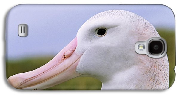 Wandering Albatross (diomendea Exulans Galaxy S4 Case by Martin Zwick