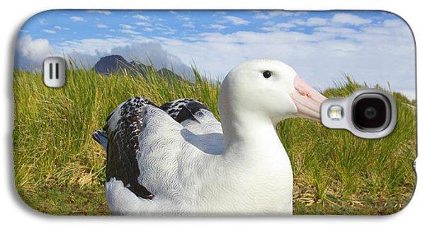 Wandering Albatross Incubating S Georgia Galaxy S4 Case by