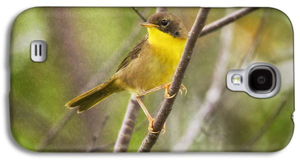 Warbler Galaxy S4 Case - Warbler In Sunlight by Susan Capuano