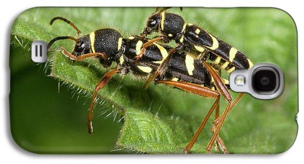 Wasp Beetles Galaxy S4 Case by Nigel Downer