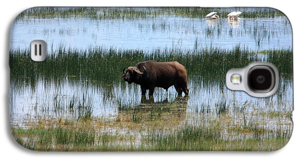 African Heritage Galaxy S4 Cases - Water Buffalo at Lake Nakuru Galaxy S4 Case by Aidan Moran