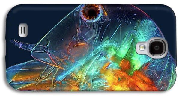 Water Flea Head Galaxy S4 Case by Marek Mis