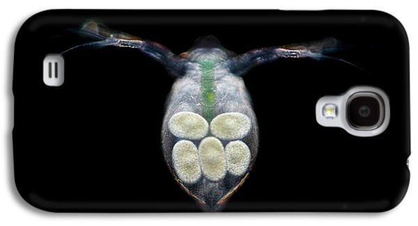 Water Flea With Eggs Galaxy S4 Case by Frank Fox