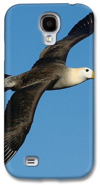 Waved Albatross Diomedea Irrorata Galaxy S4 Case by Panoramic Images