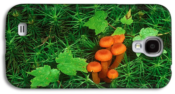 Wax Cap Fungi Galaxy S4 Case by Jeff Lepore
