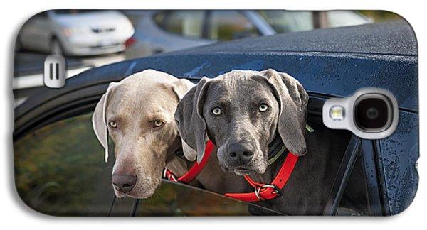 Weimaraner Dogs In Car Galaxy S4 Case by Elena Elisseeva