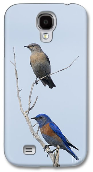 Western Bluebird Pair Galaxy S4 Case by Mike  Dawson