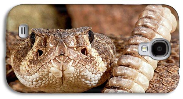 Western Diamondback Rattlesnake Galaxy S4 Case by David Northcott
