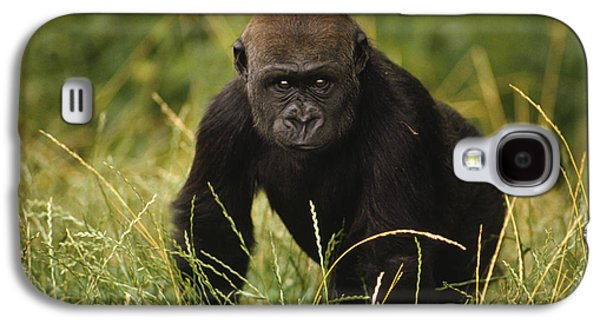 Western Lowland Gorilla Juvenile Galaxy S4 Case by Gerry Ellis