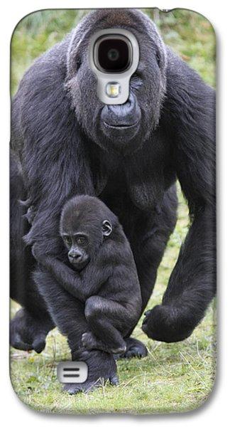 Western Lowland Gorilla Walking Galaxy S4 Case