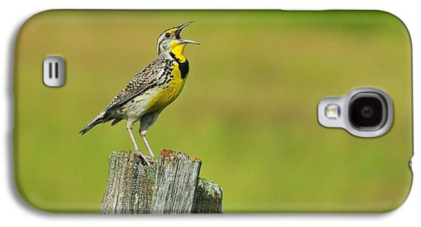 Western Meadowlark Galaxy S4 Case by Tony Beck