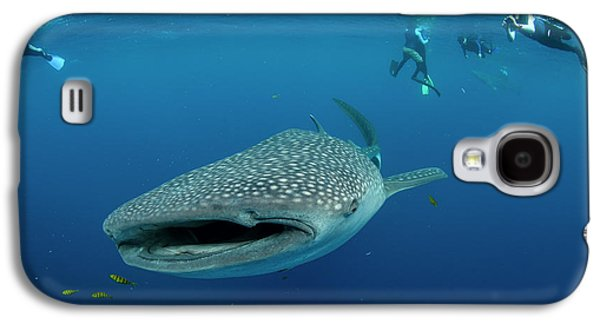 Whale Shark And People Galaxy S4 Case
