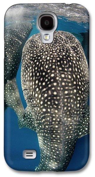 Whale Shark Feeding At Bagan Galaxy S4 Case