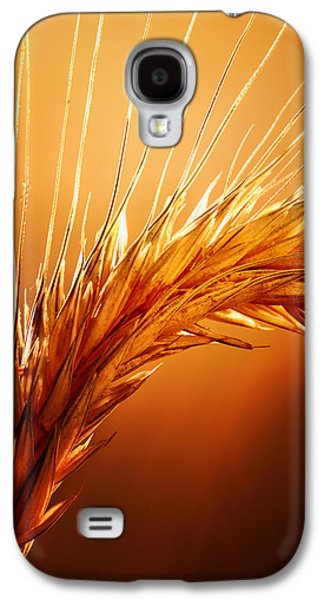 Wheat Close-up Galaxy S4 Case by Johan Swanepoel
