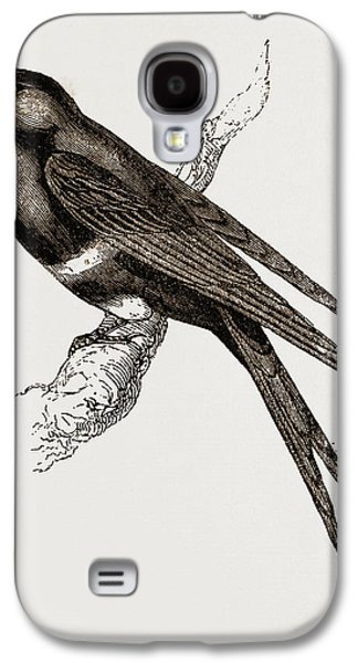 White-banded Swallow Galaxy S4 Case