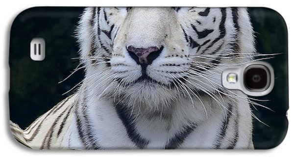 Blue Eyed White Bengal Tiger Galaxy S4 Case by Daniel Hagerman