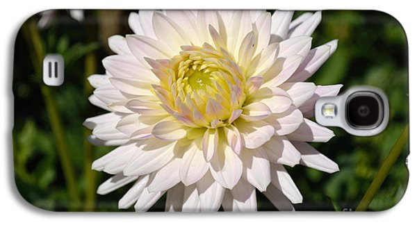White Dahlia Flower Galaxy S4 Case