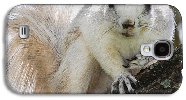 White Fox Squirrel Galaxy S4 Case by Betsy Knapp