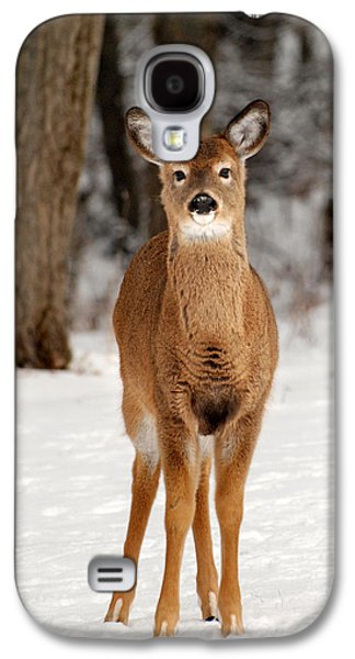 Whitetail In Snow Galaxy S4 Case by Christina Rollo