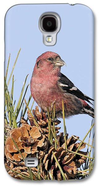 White-winged Crossbill On Pine Galaxy S4 Case