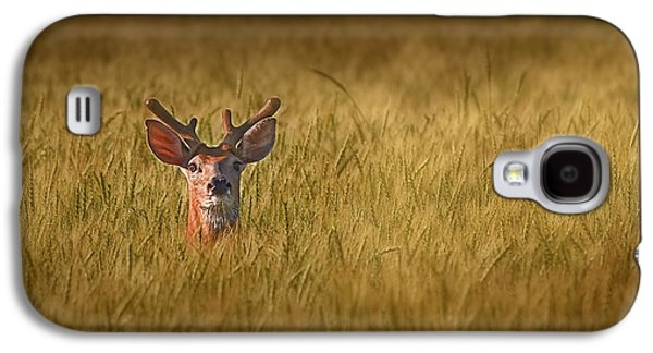 Whitetail Deer In Wheat Field Galaxy S4 Case