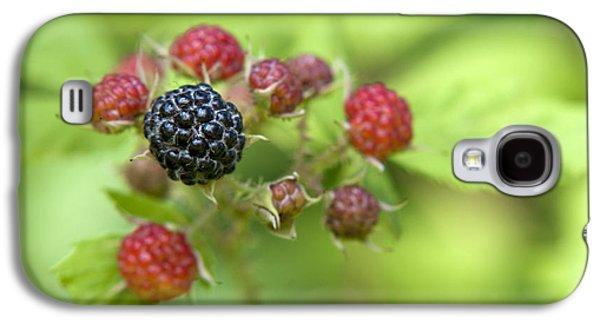 Wild Berries Galaxy S4 Case by Christina Rollo