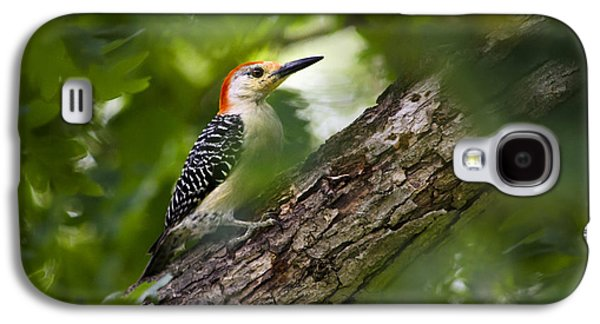 Red Bellied Woodpecker Galaxy S4 Case by Christina Rollo