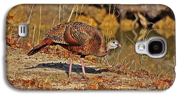 Wild Turkey Galaxy S4 Case by Al Powell Photography USA