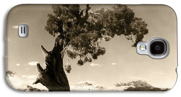 Wind Swept Tree Galaxy S4 Case by Scott Norris