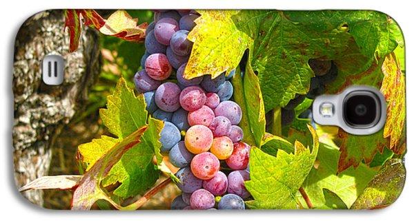 Wine Grapes II Galaxy S4 Case by Shari Warren