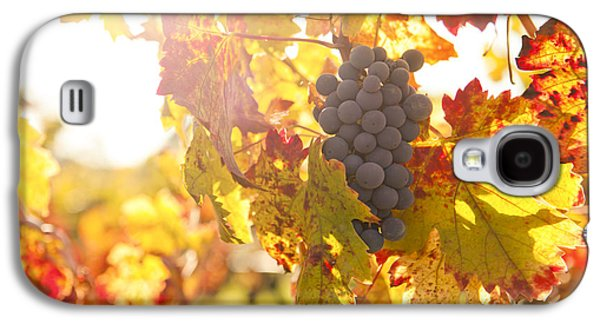 Wine Grapes In The Sun Galaxy S4 Case by Diane Diederich