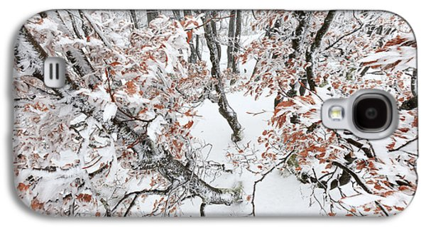 Winter European Beech Forest In Vosges Galaxy S4 Case