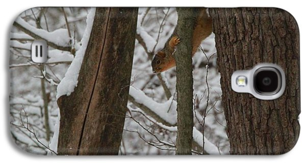 Winter Squirrel Galaxy S4 Case by Dan Sproul