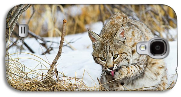 Wyoming, Sublette County, Bobcat Galaxy S4 Case