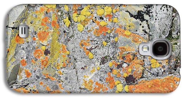 Xanthoria Lichen On A Rock Galaxy S4 Case